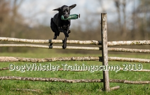 DogWhistler Retriever Trainingsferien